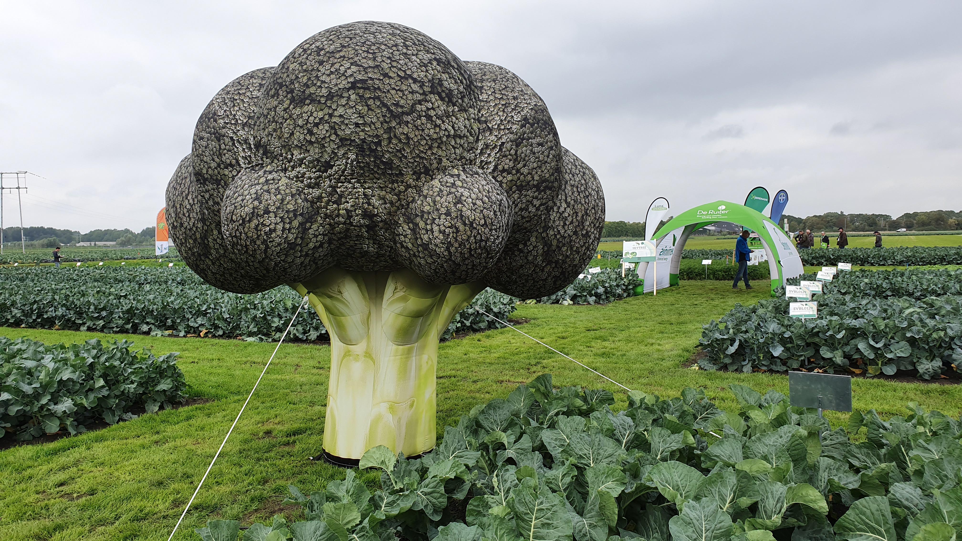 opblaasbare broccoli, blowups, giant inflatable broccoli, uitvergrote broccoli, productvergroting